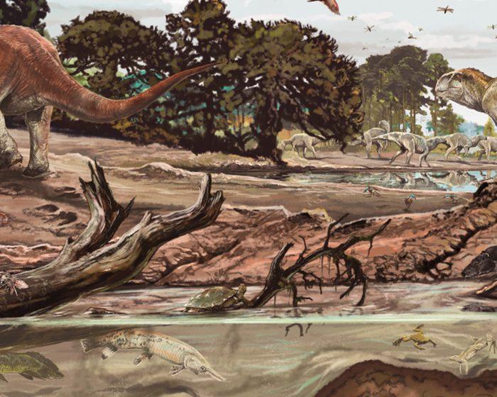 Publican un libro sobre mamíferos fósiles de la Era Mesozoica en América del Sur