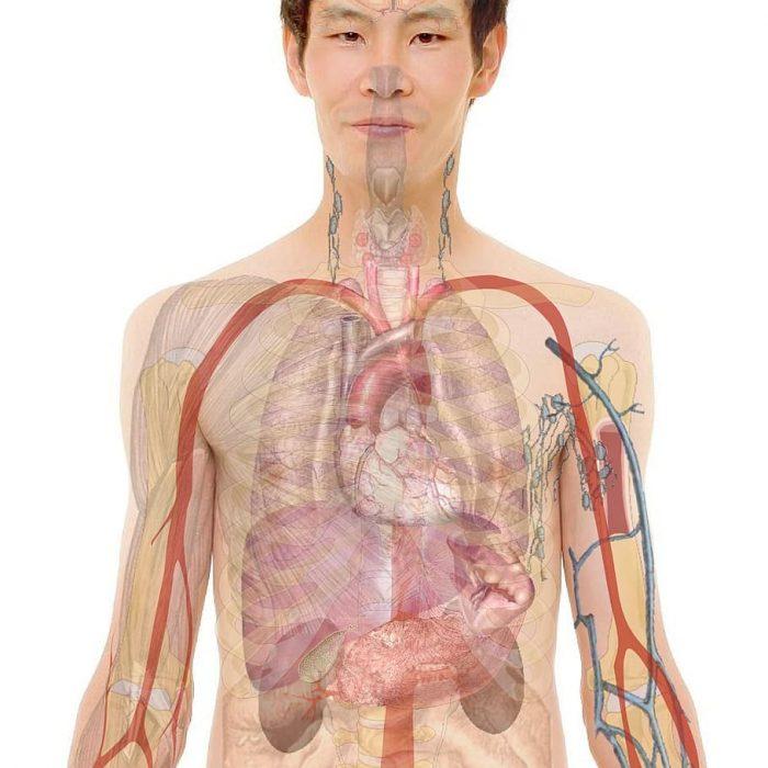 Alrededor del 10% de la población mundial sufre algún tipo de daño renal