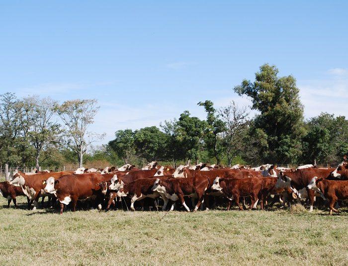Óxido nitroso: cuanto aporta la ganadería en períodos invernales