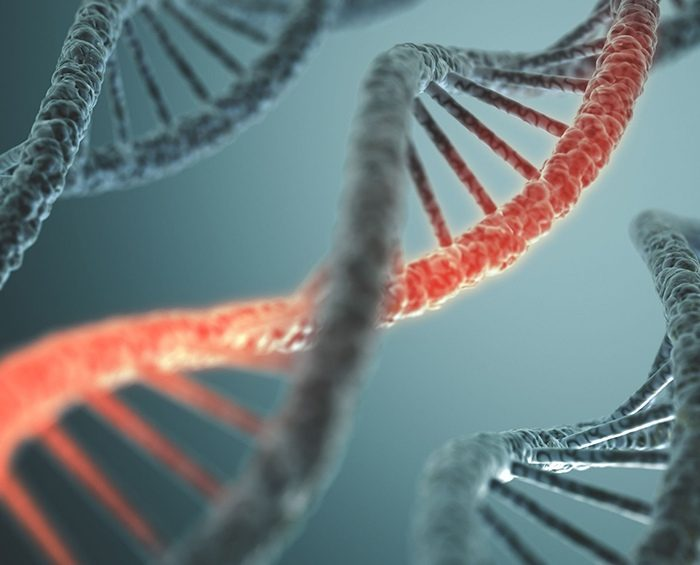 Identifican 70 genes de células pulmonares que se verían afectados por la infección de coronavirus