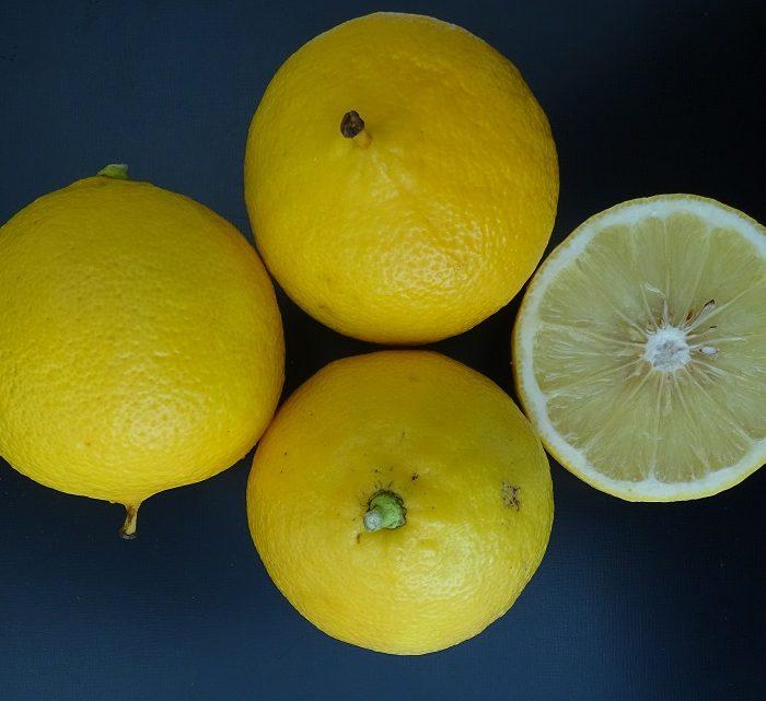 Impulsan la sanidad controlada en la producción de bergamota