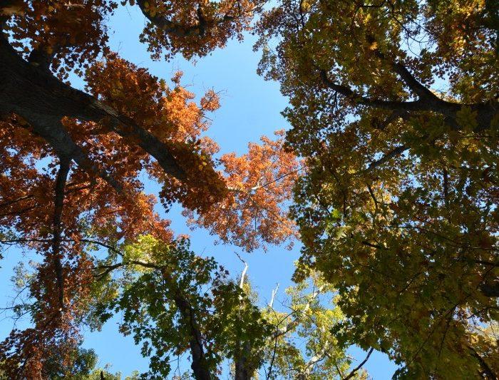 Época ideal para planificar una forestación