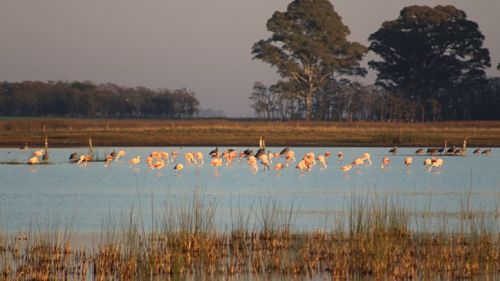 Los humedales pampeanos varían en su biodiversidad de aves acuáticas