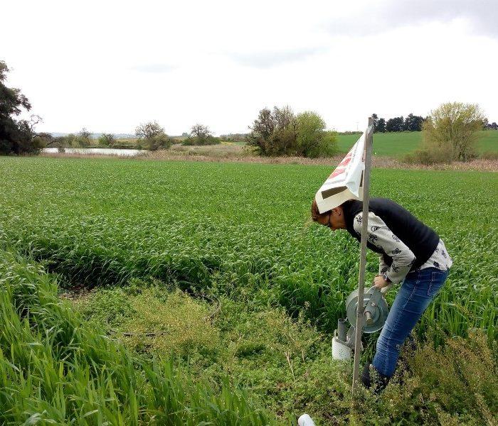 Evalúan estrategias para la remediación ambiental de los agroecosistemas