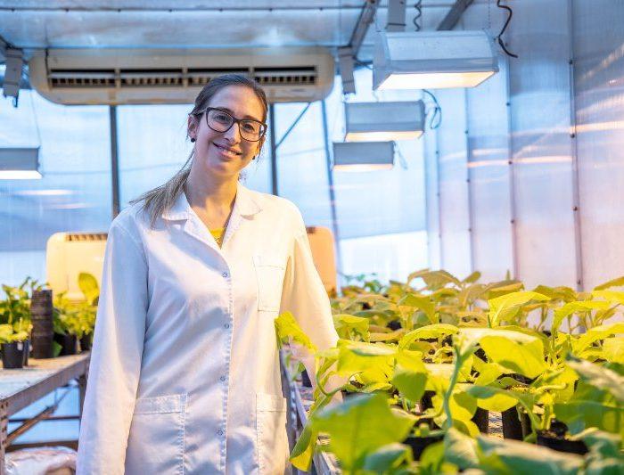 Estudian los mecanismos que utilizan los virus para infectar plantas
