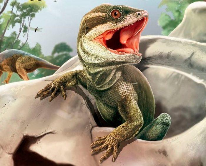 """Hallaron al """"padre de los lagartos"""", un eslabón del árbol evolutivo mundial que faltaba"""