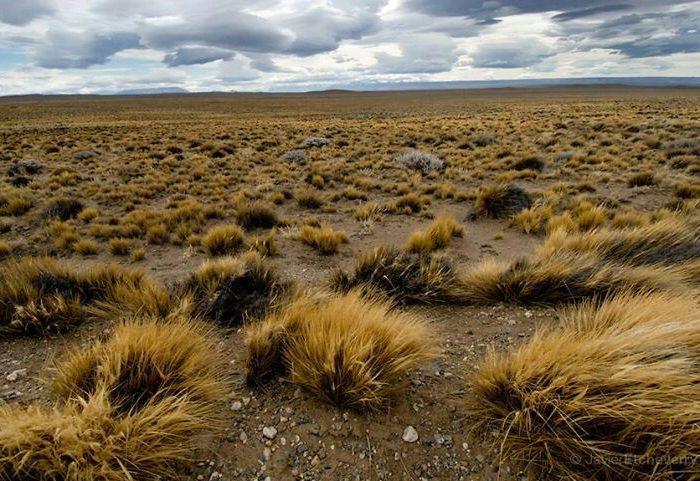 Determinan el efecto del ser humano sobre la desertificación en Patagonia