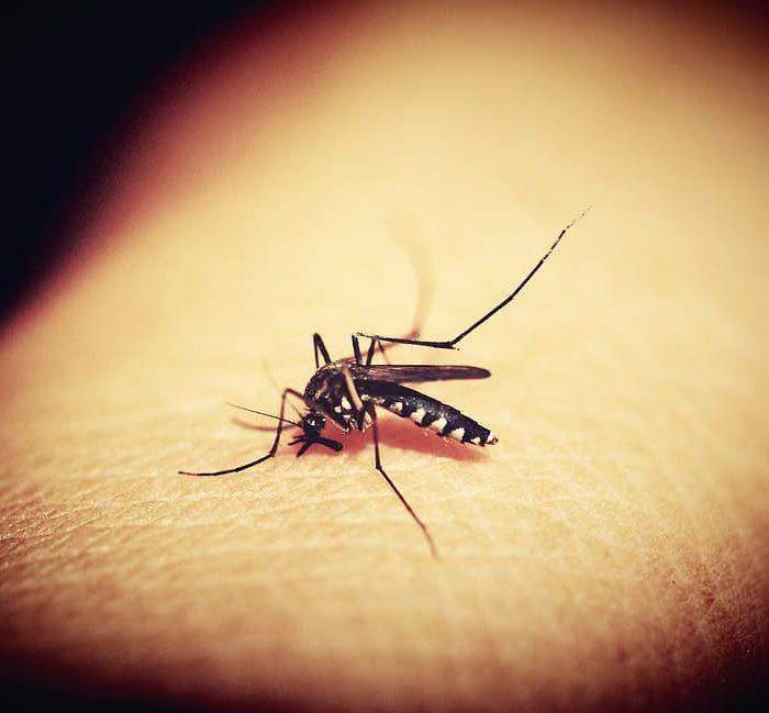 Dengue: la importancia de concientizar sobre los peligros de la infección