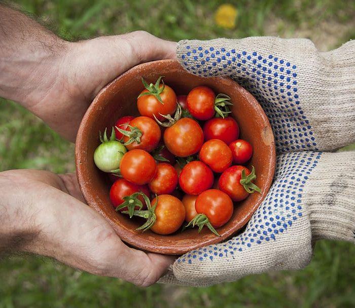 La verdad del tomate