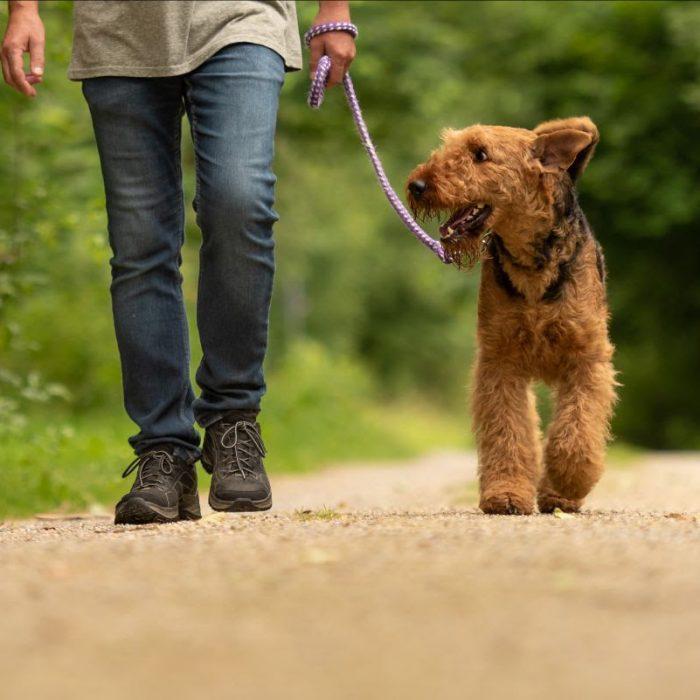 8 actividades recreativas que podemos realizar junto a nuestro perro al aire libre